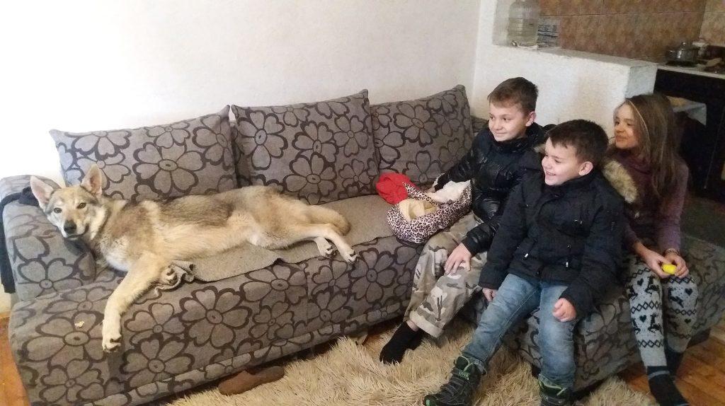 """""""Тара е дел од нашето семејство. Уште од првиот ден кога ја донесов сите ја засакавме. Знам дека е невообичаено волчица да биде домашно милениче, но Тара е толку умна и питома што не би ја менувале за ништо друго"""", ни вели Гоце Зафировски од Брвеница, за миленицата што живее со неговите три деца (Фото: ЗАНДОН)"""