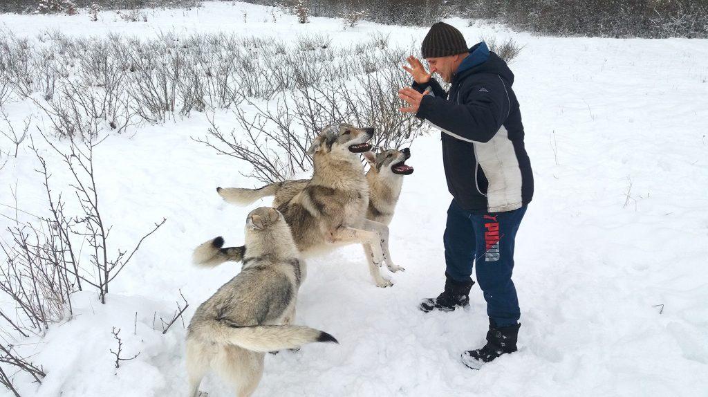 """""""Со моите волци сум немал проблем, но со луѓето сум имал. Некои луѓе, а посебно деца од соседното село Слатина, знаат да дојдат и да ги задираат и иритираат волците. Тоа не е добро. Волкот има многу добро паметење и може после подолго време да го препознае човекот кој некогаш го вознемирувал"""", вели Фадил (Фото: ЗАНДОН)"""